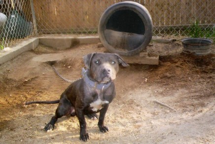 Ghetto Dog Names http://apbt.online-pedigrees.com/modules.php?name=Public&file=printPedigree&dog_id=239900